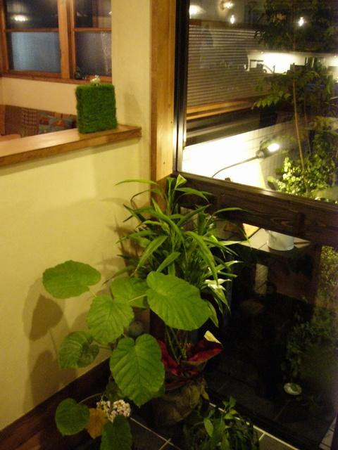 遊眠堂入口入ったところにある植物