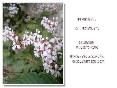 DSC308011.jpg