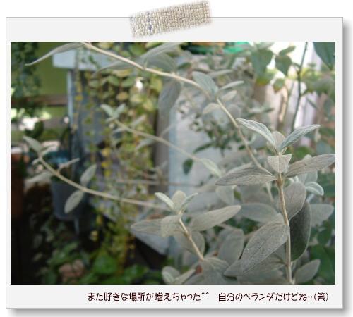 DSC59381.jpg