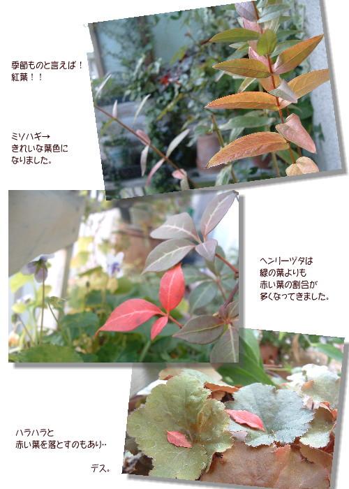 DSC59671.jpg