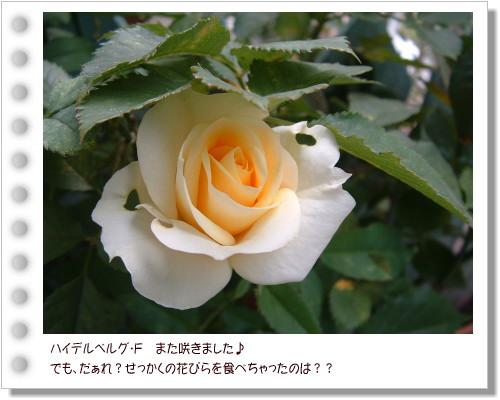 DSC59731.jpg