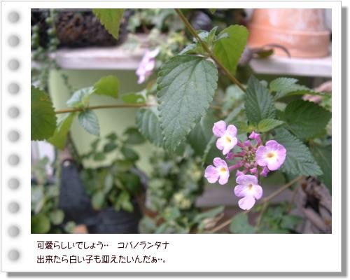 DSC59741.jpg