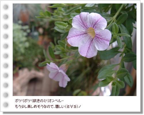 DSC59751.jpg