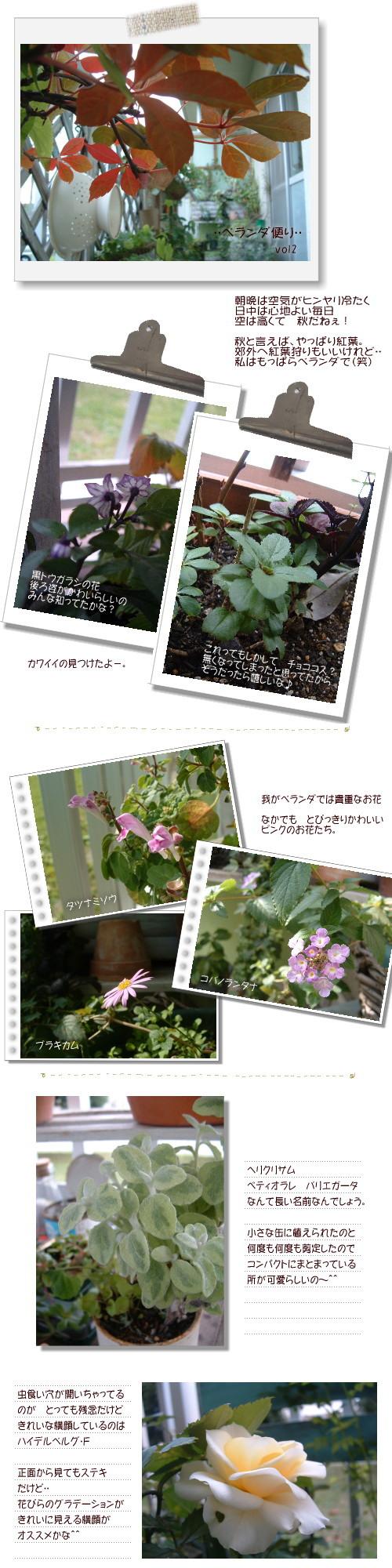 DSC60511.jpg