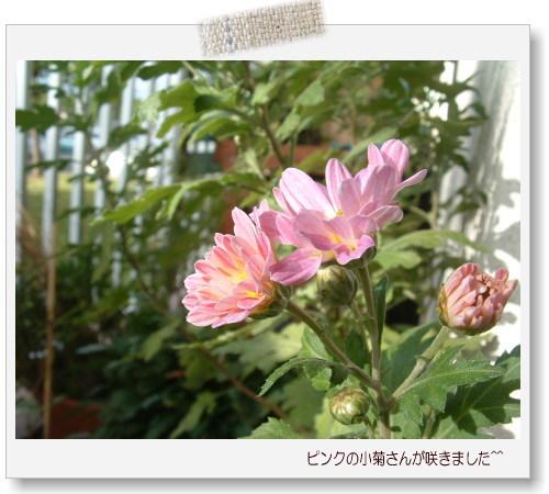 DSC60791.jpg