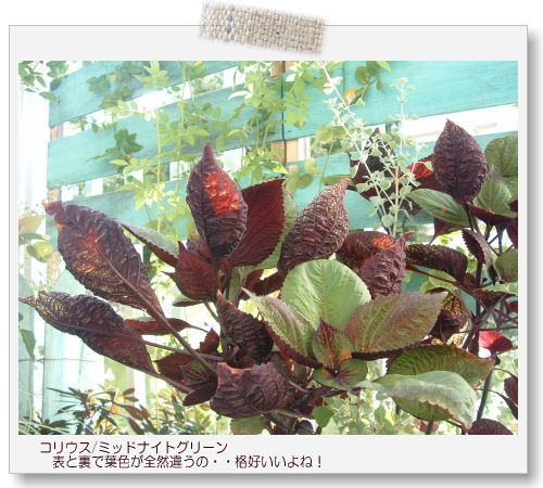 DSC60831.jpg