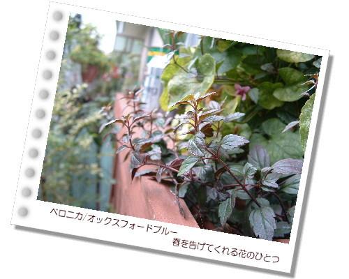 DSC60941.jpg