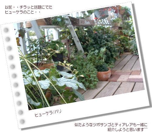 DSC60971.jpg