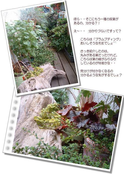 DSC61041.jpg