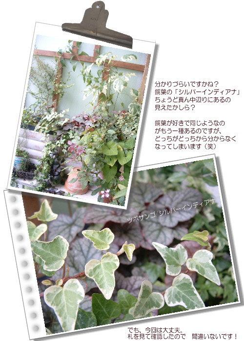 DSC61051.jpg