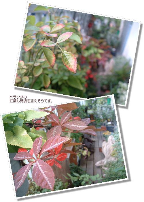 DSC61071.jpg