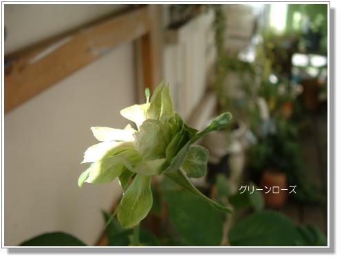 DSC61111.jpg