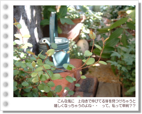 DSC612611.jpg