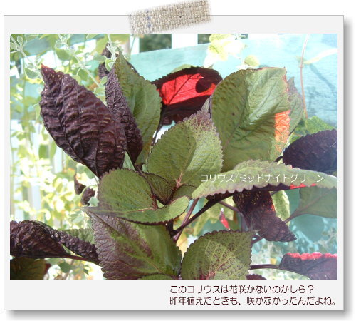 DSC615011.jpg
