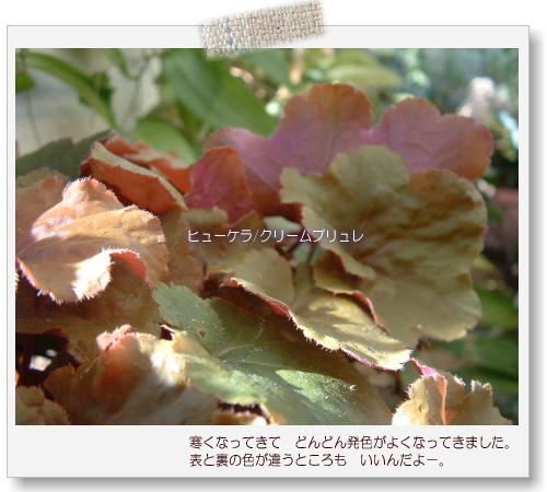 DSC615211.jpg