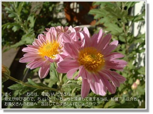DSC616011.jpg