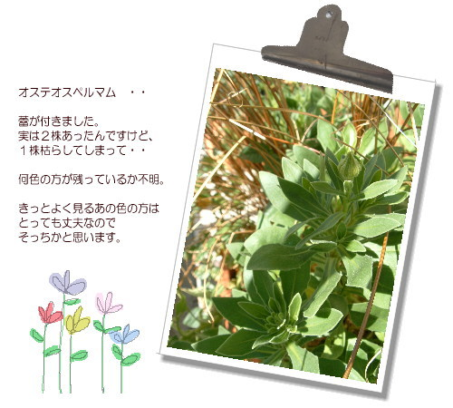 DSC616111.jpg