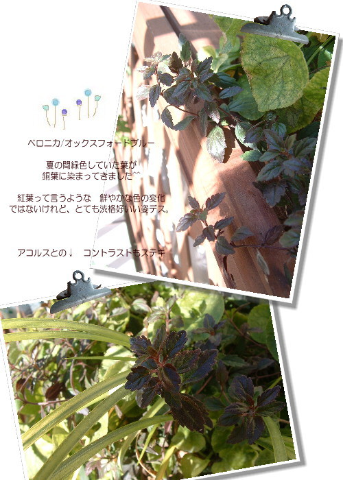 DSC616211.jpg