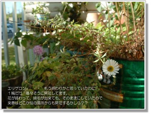 DSC616711.jpg