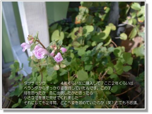 DSC616811.jpg