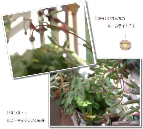 DSC618611.jpg