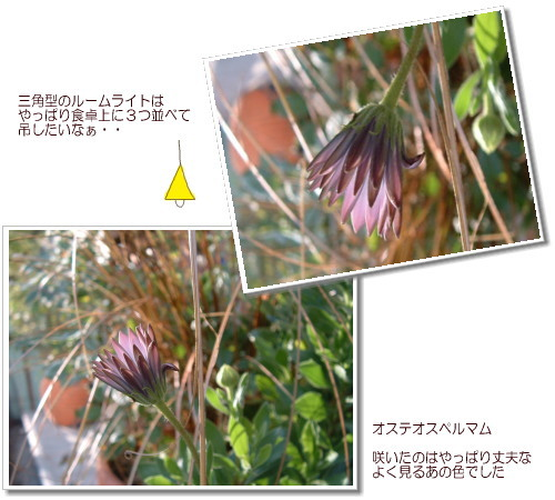 DSC618711.jpg