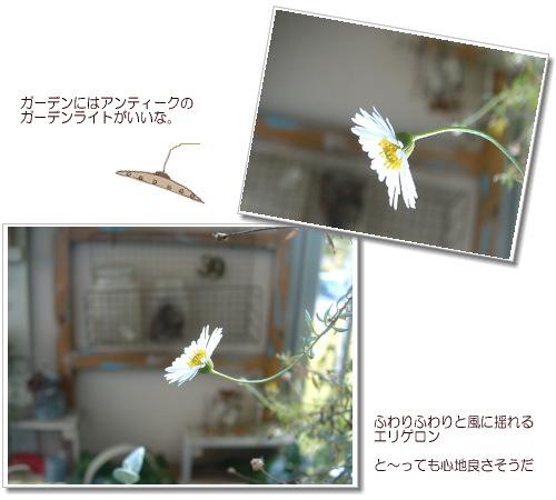 DSC619311.jpg