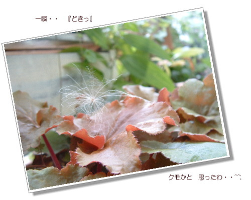 DSC619811.jpg