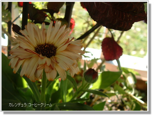 DSC634711.jpg