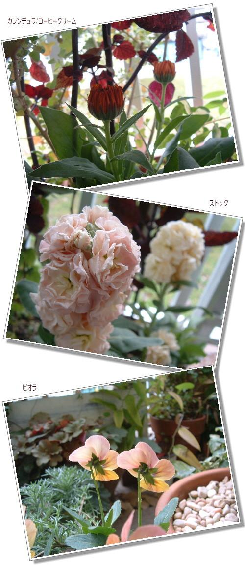 DSC638011.jpg