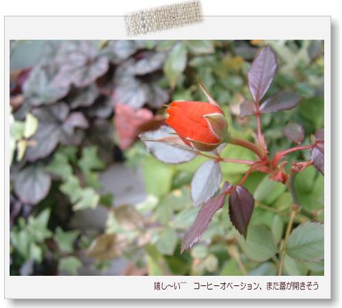 DSC638711.jpg