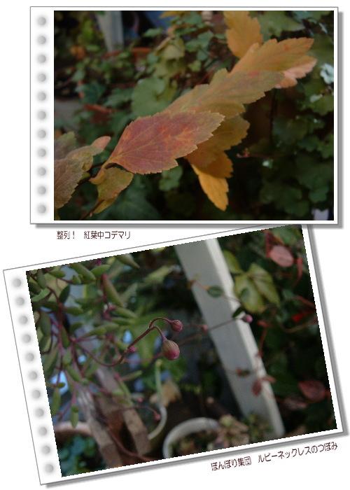DSC657311.jpg