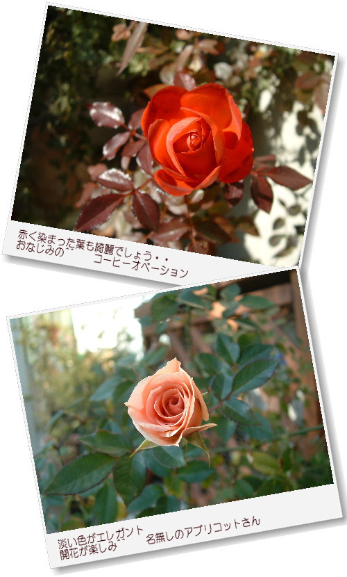 DSC674511.jpg