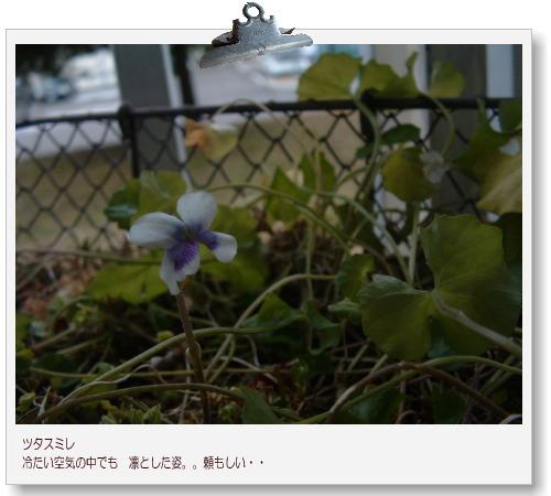 DSC678511.jpg