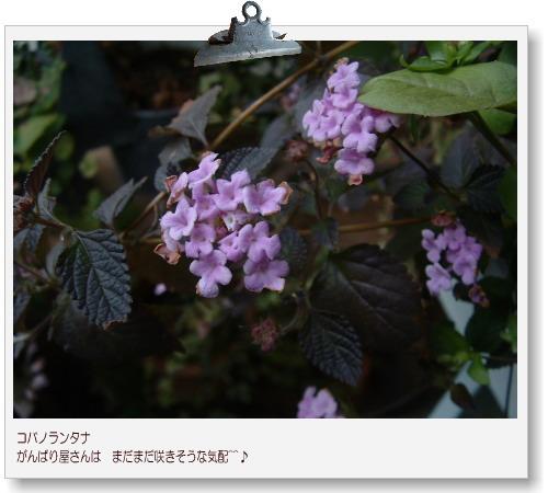 DSC678711.jpg
