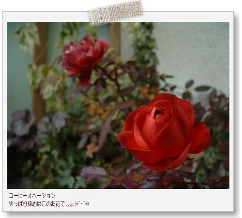 DSC678811.jpg