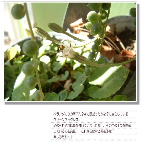 DSC679011.jpg