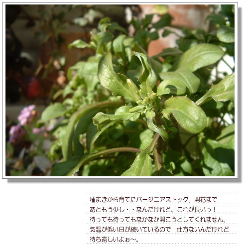 DSC679111.jpg
