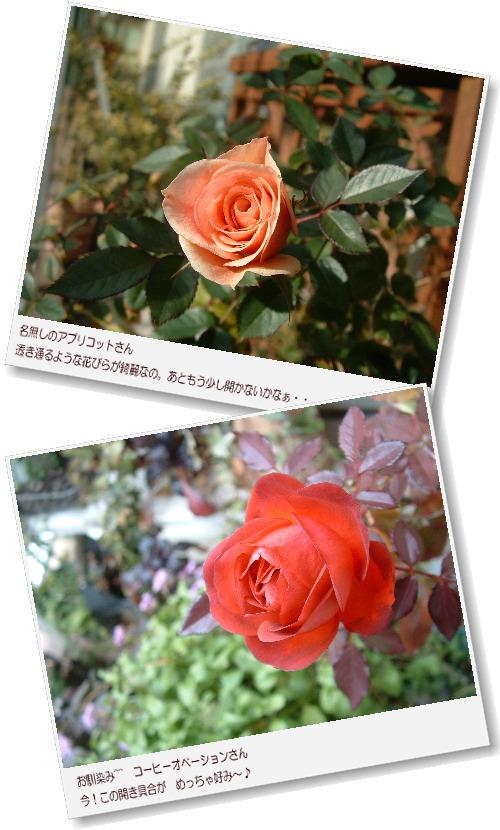 DSC679611.jpg