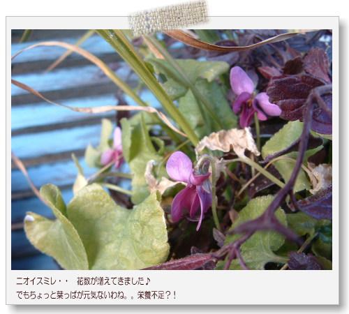 DSC684011.jpg