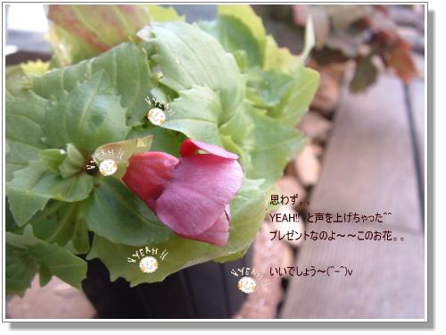 DSC685311.jpg