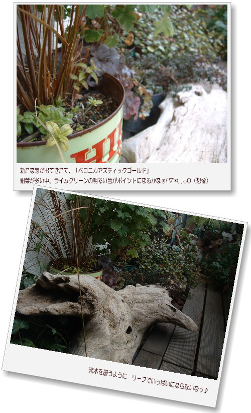 DSC706111.jpg