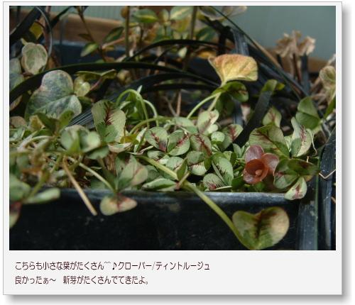 DSC707211.jpg