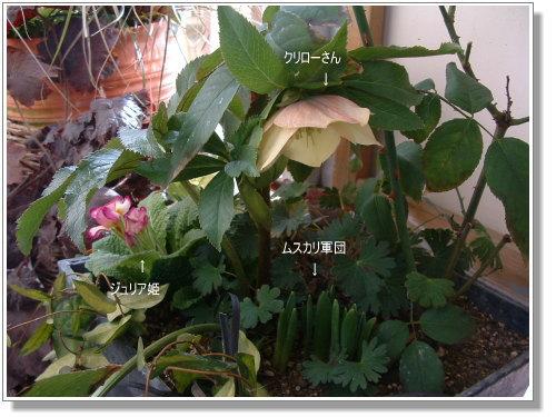 DSC730511.jpg