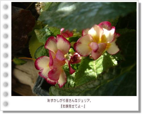 DSC731111.jpg