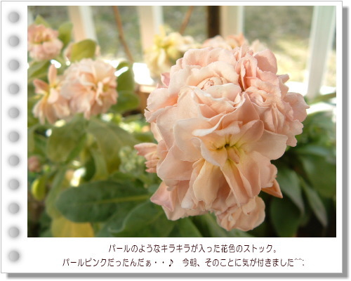DSC731411.jpg