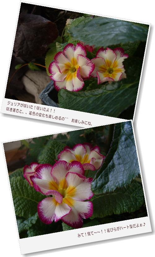 DSC732011.jpg