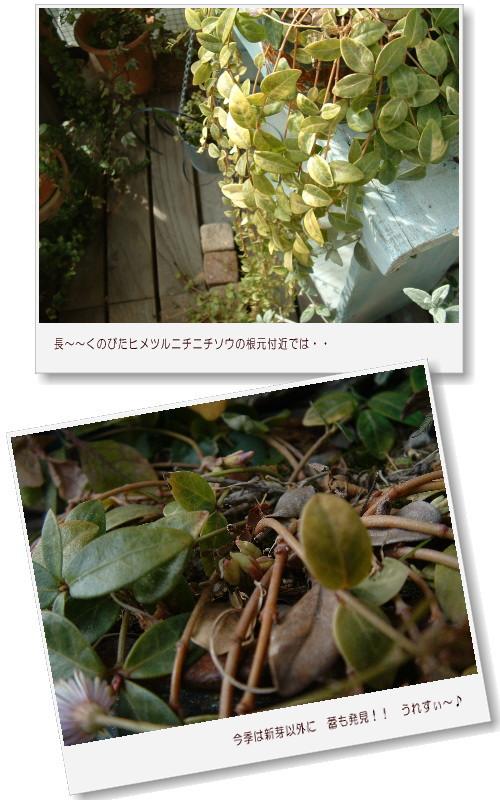 DSC732211.jpg