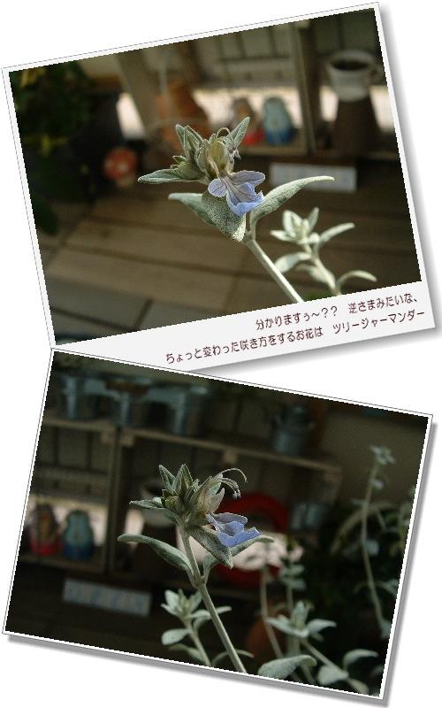 DSC732711.jpg