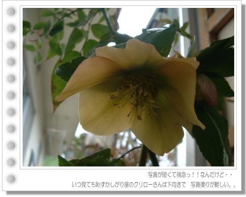 DSC737811.jpg